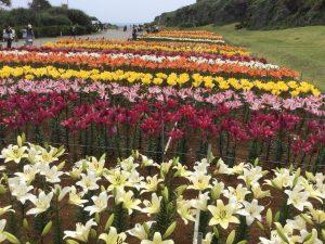 伊江島ゆり祭り1